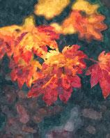 Fall / Autumn ( Code : DFA23 )
