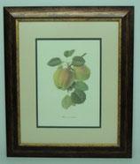Φρούτα 6  (ΚΩΔ: F6P2)
