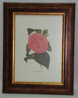 Floral & Plant 2  (Code: FP2)
