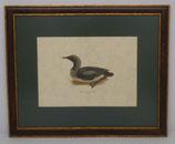 Ζώα & Πουλιά 10  (ΚΩΔ: ΑΒ10MP1)