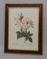 Floral & Plant 9 (Code: FP9M)