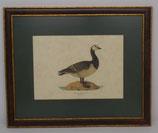 Ζώα & Πουλιά 12  (ΚΩΔ: ΑΒ12MP1)