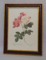 Floral & Plant 10  (Code: FP10M)