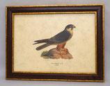 Ζώα & Πουλιά 8  (ΚΩΔ: ΑΒ8M)