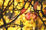 Fall / Autumn ( Code : DFA11 )