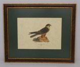 Ζώα & Πουλιά 8  (ΚΩΔ: ΑΒ8MP1)