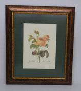 Floral & Plant 13  (Code: FP13P1)