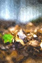 Fall / Autumn ( Code : DFA18 )