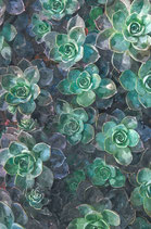Λουλούδια  ( Code : DF9 )