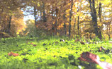Fall / Autumn ( Code : DFA14 )