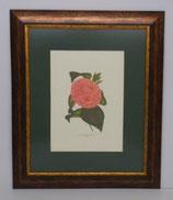 Floral & Plant 2  (Code: FP2P1)