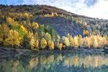 Fall / Autumn ( Code : DFA16 )