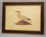 Ζώα & Πουλιά 13 (ΚΩΔ: ΑΒ13M)