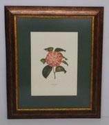Floral & Plant 5 (Code: FP5P1)