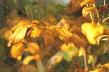 Fall / Autumn ( Code : DFA25 )