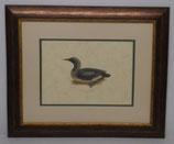 Ζώα & Πουλιά 10  (ΚΩΔ: ΑΒ10P2)