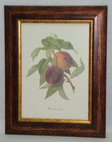 Φρούτα 8   (ΚΩΔ: F8)