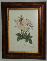 Λουλούδια & Φυτά 9  (ΚΩΔ: FP9)
