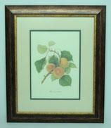 Fruit 3  (Code: F3P2)