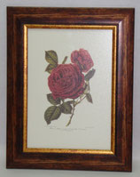 Floral & Plant 4  (Code: FP4)
