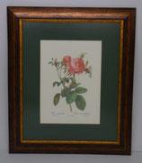 Floral & Plant 11 (Code: FP11P1)