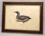Animal & Bird 10  (Code: AB10M)