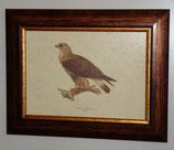 Ζώα & Πουλιά 9  (ΚΩΔ: ΑΒ9)