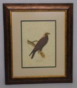 Animal & Bird 5  (Code: AB5P2)