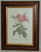 Floral & Plant 11 (Code: FP11)