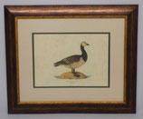 Ζώα & Πουλιά 12  (ΚΩΔ: ΑΒ12P2)