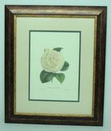 Floral & Plant 3  (Code: FP3P2)