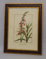 Λουλούδια & Φυτά 19  (ΚΩΔ: FP19M)