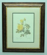 Floral & Plant 14 (Code: FP14P2)