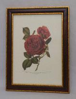 Floral & Plant 4  (Code: FP4M)