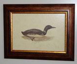 Ζώα & Πουλιά 14 (ΚΩΔ: ΑΒ14)