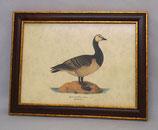 Ζώα & Πουλιά 12  (ΚΩΔ: ΑΒ12M)