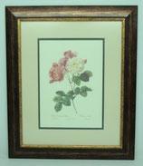 Floral & Plant 10  (Code: FP10P2)