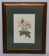 Floral & Plant 9 (Code: FP9P1)