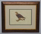 Ζώα & Πουλιά 9  (ΚΩΔ: ΑΒ9P2)