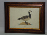 Animal & Bird 12  (Code: AB12)