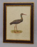 Animal & Bird 7  (Code: AB7M)