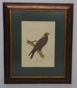 Animal & Bird 5  (Code: AB5P1)
