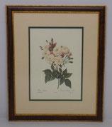 Λουλούδια & Φυτά 9  (ΚΩΔ: FP9MP2)
