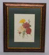 Λουλούδια & Φυτά 16  (ΚΩΔ: FP16P1)
