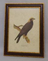 Animal & Bird 5  (Code: AB5M)