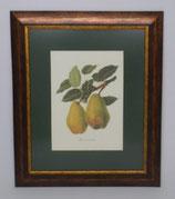 Fruit 4  (Code: F4P1)