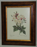 Floral & Plant 9 (Code: FP9)