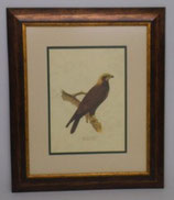 Ζώα & Πουλιά 5  (ΚΩΔ: ΑΒ5P2)