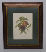 Fruit 8  (Code: F8P1)