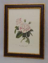 Λουλούδια & Φυτά 6  (ΚΩΔ: FP6M)